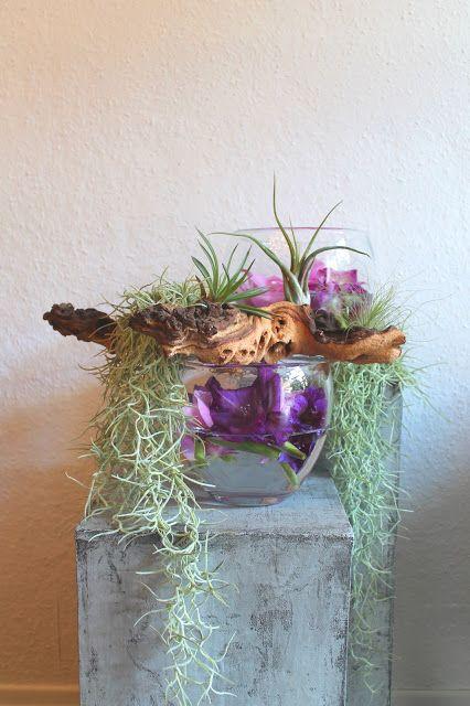 Tillandsien luftpflanzen 1 tillandsien air plants - Tillandsien deko ...