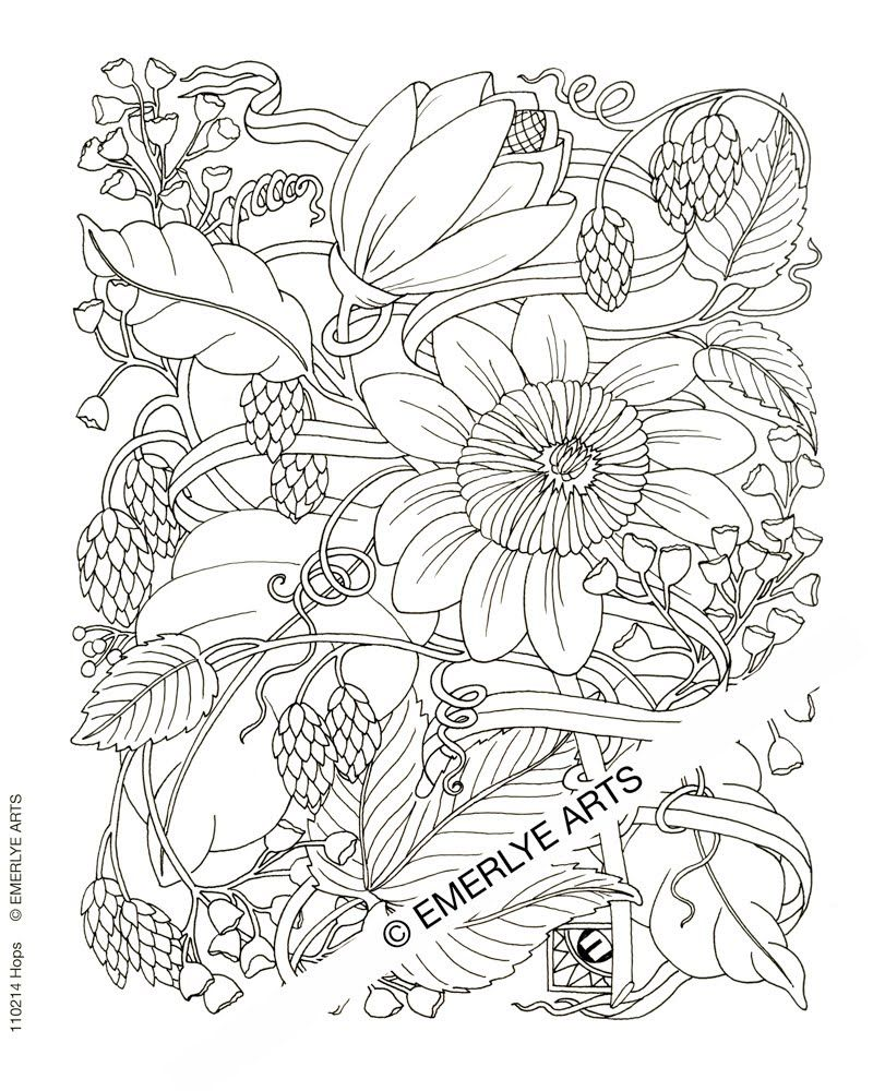 Cynthia Emerlye, Vermont artist and life coach: Hops - line drawing ...