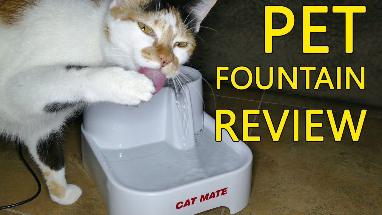 Cat mate pet drinking fountain why its good for your