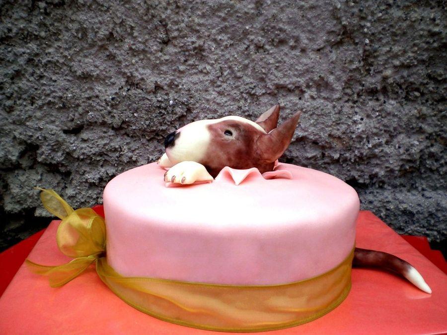 Картинка с днем рождения с бультерьером, любимой