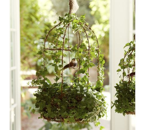Live Bird Cage Ivy Topiary Diy Garden Projects Garden