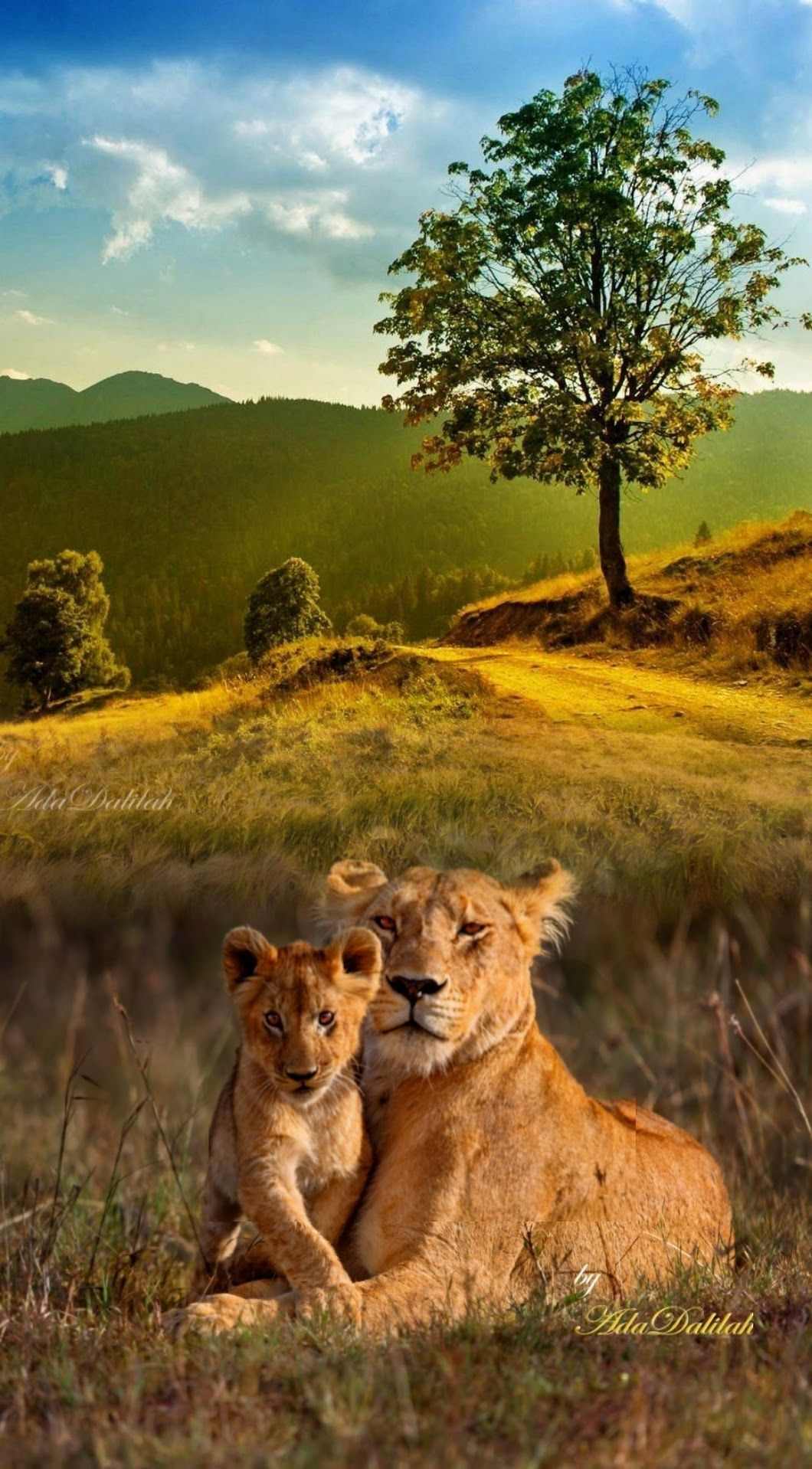 Pin By Pearl Aranda On Cute And Adorable Animals Animals Wild Beautiful Cats Nature Animals
