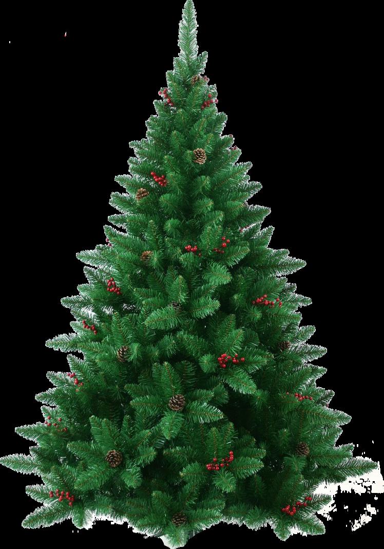 Https Www Google Com Search Q Christmas Tree Png Christmas Tree Pictures Pine Christmas Tree Christmas Tree
