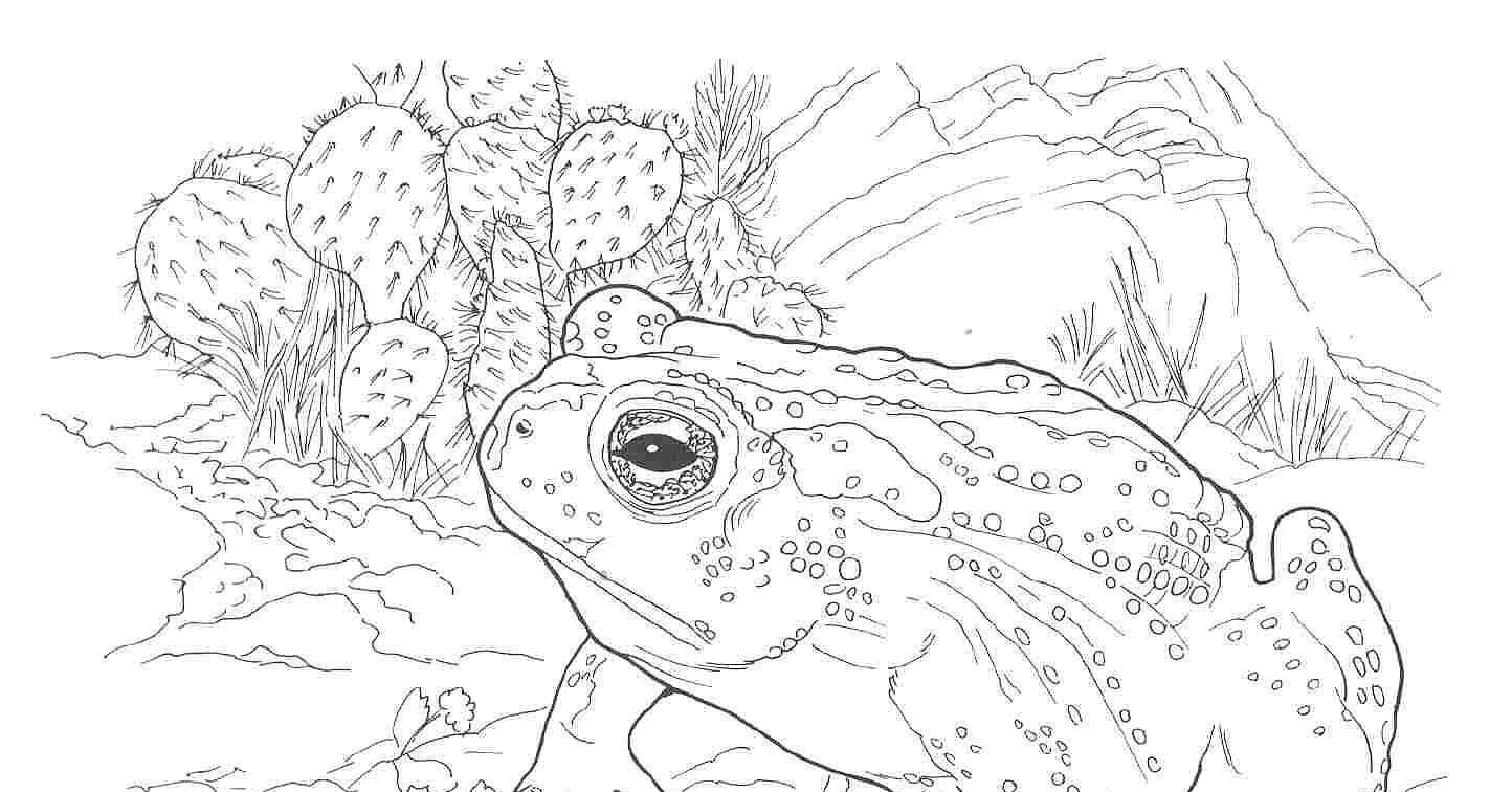 Coloring Pages Animals Southwestern Us Google Search Coloring Pages Native Americans Unit Animals [ jpg ]