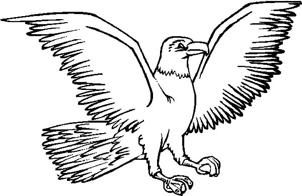 Pin On Harpy Eagle Coloring Pages