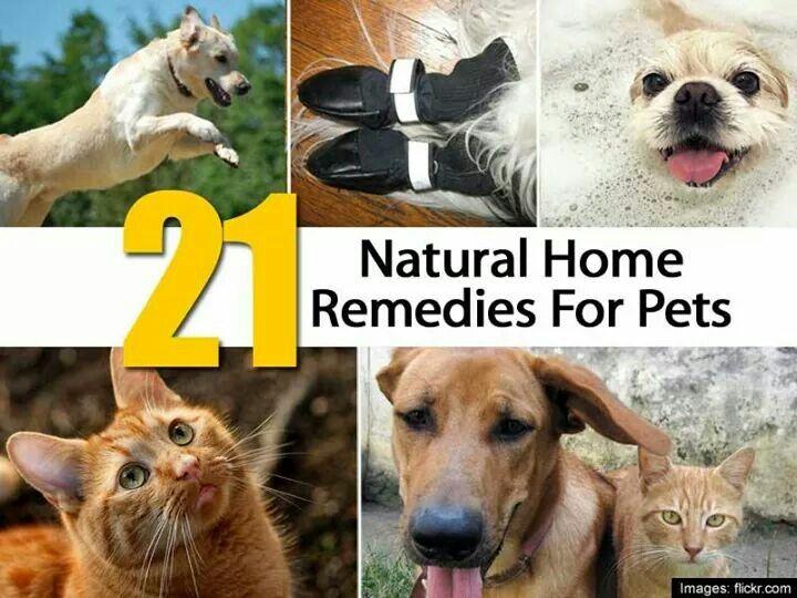 21 Natural Home Remedies For Pets Natural Pet Care Pet Meds Pets