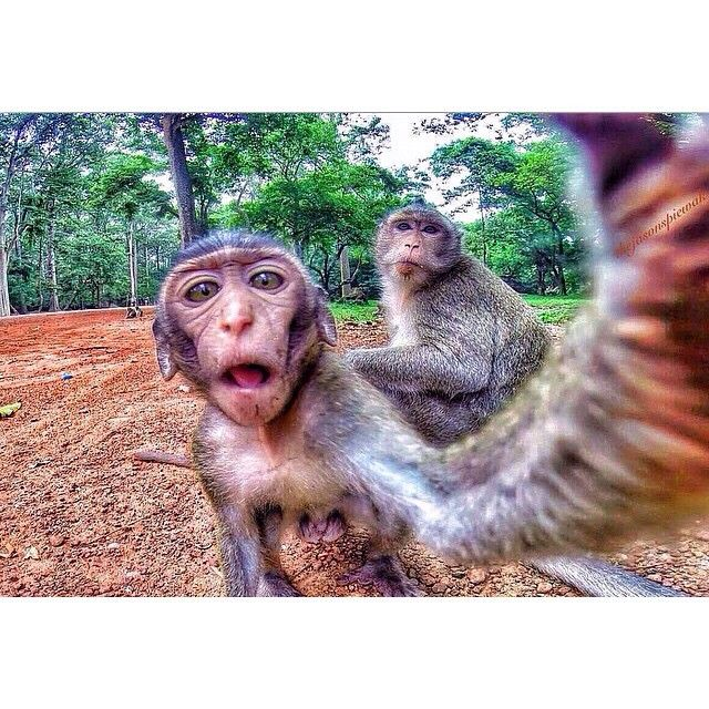 GoPro Selfie Of Day Goprohero4 Monkey Love