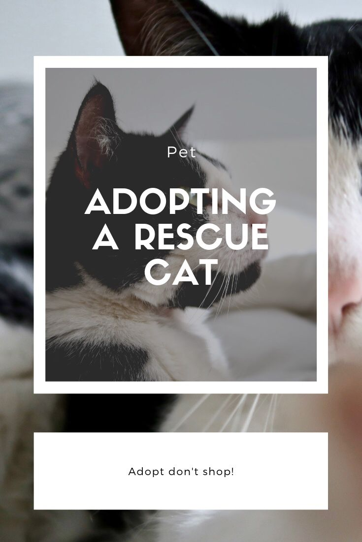 Adopt Don T Shop Adopting A Rescue Cat Cat Rescue Adoption