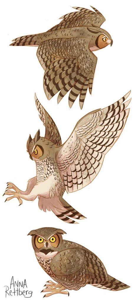 twitter  eule zeichnung vögel zeichnen tiere zeichnen
