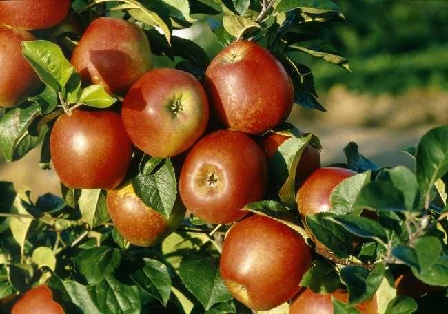 Octobre-novembre : que planter au potager ? | Jardin ...