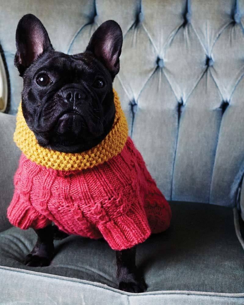 hundepullover stricken 42 warme ideen strickanleitung diy dog and animal. Black Bedroom Furniture Sets. Home Design Ideas