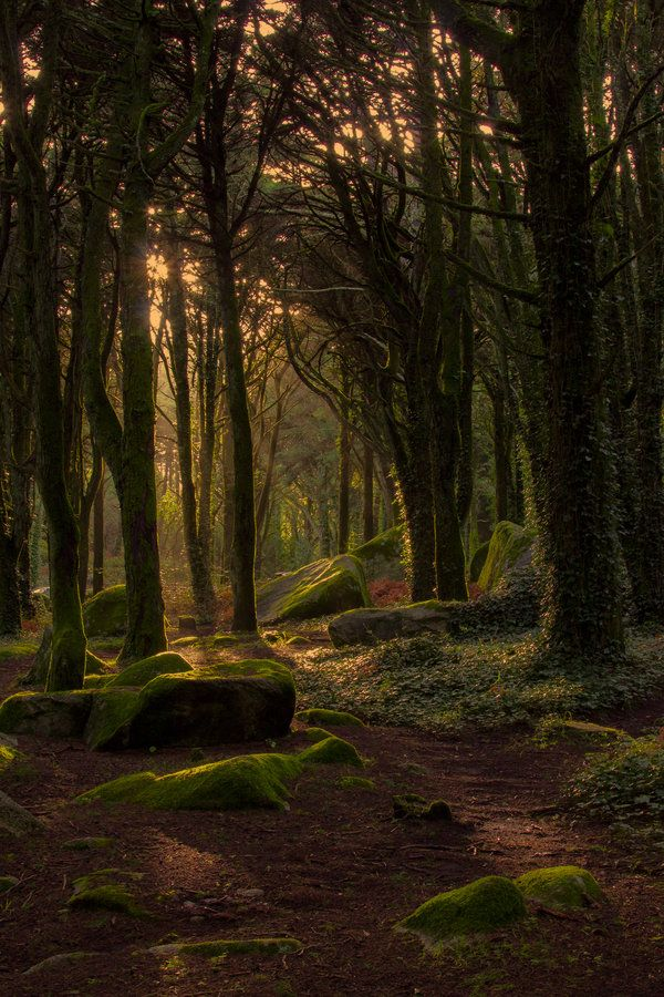 Fantasy Landscape Forests Magic