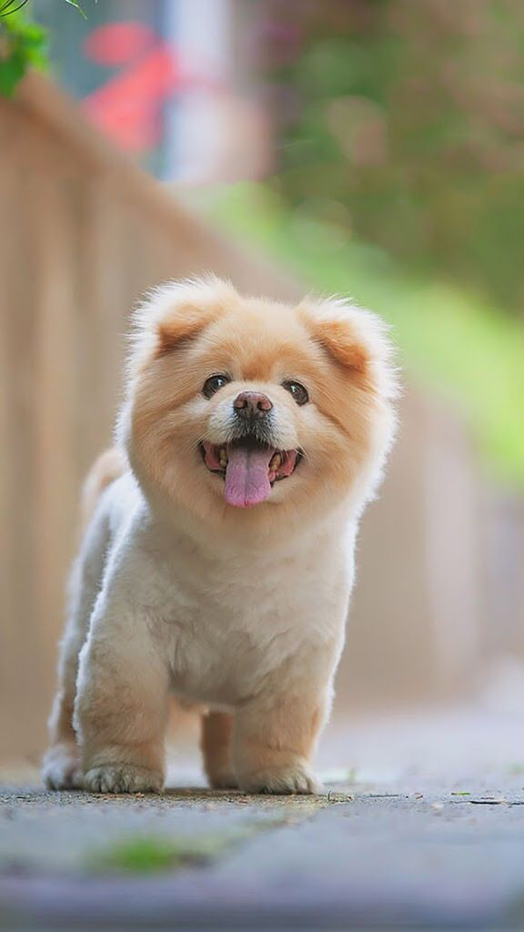 I Would Like This Haircut On My Baby Animals Puppies