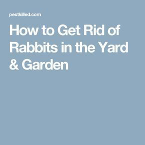 How to Get Rid of Rabbits in the Yard & Garden | How to ...