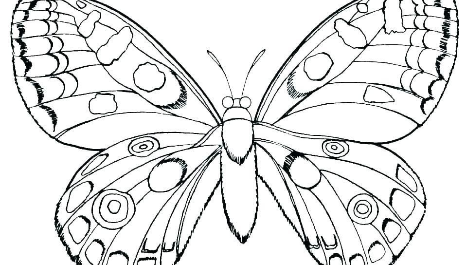 Coloring Monarch Butterfly Wings Coloring Page Pages Of Monarch Insect Coloring Pages Bug Coloring Pages Flower Coloring Pages