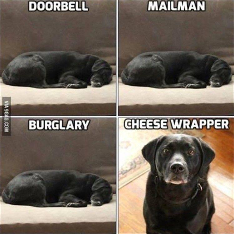 Afbeeldingsresultaat voor dogs and cheese wrappers