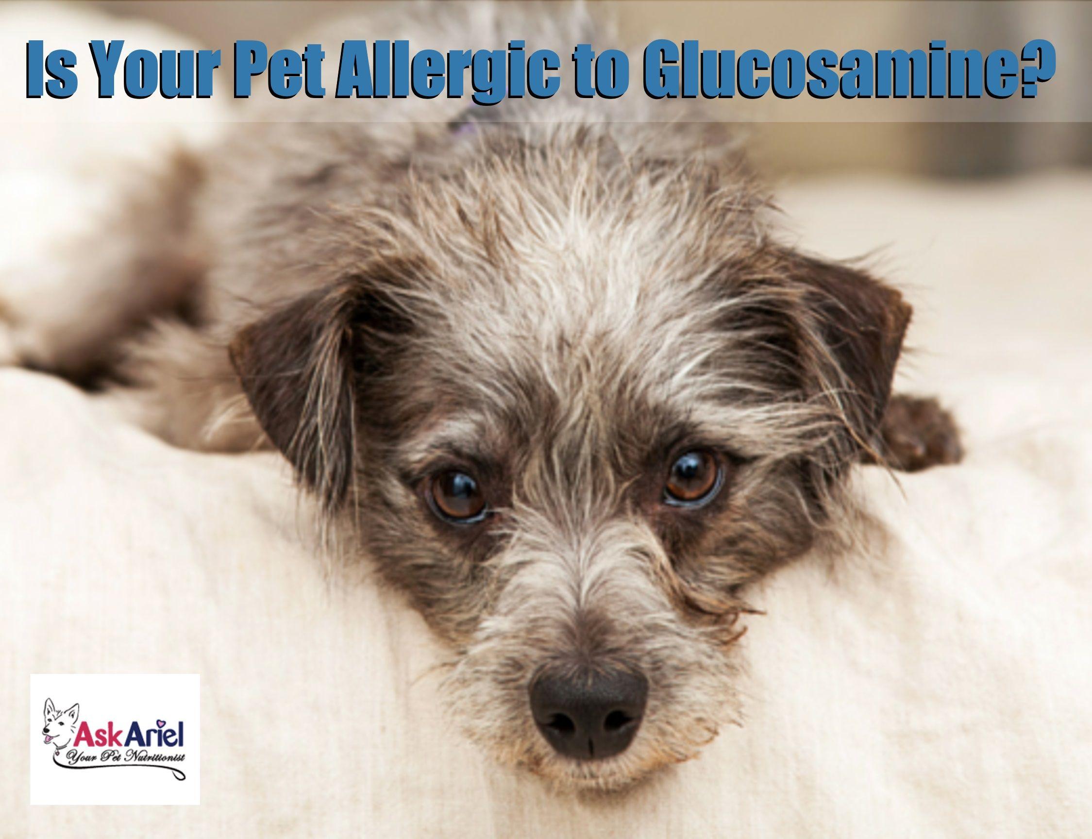 UltraFlex Collagen Supplement for Dogs & Cats Ask Ariel