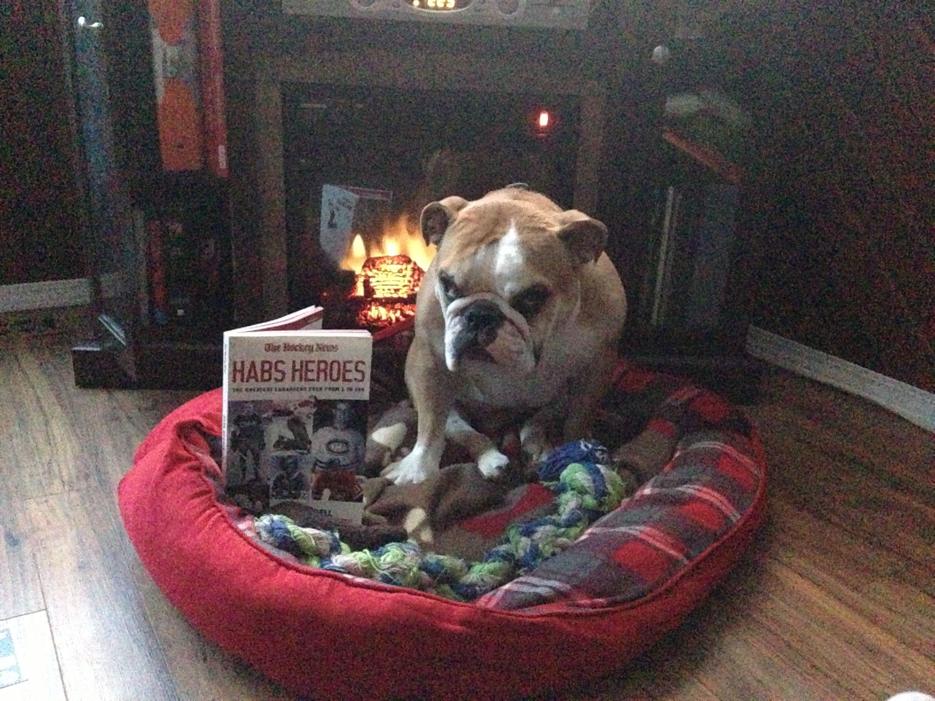 Bulldog Sometimes You Want To Curl Up By The Fire And Read A Good