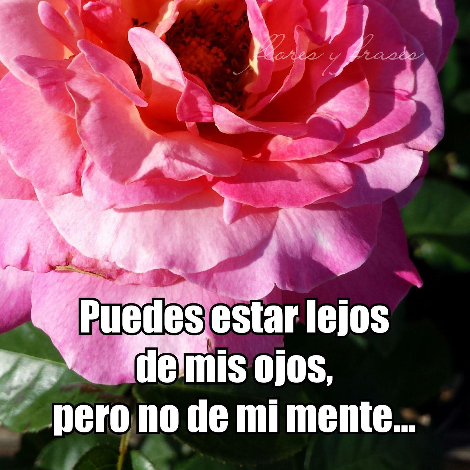 Imagenes De Flores Con Mensajes De Amor