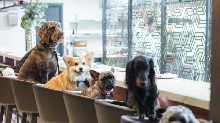 This Is London Fashion Week S Hottest Dog Friendly After Party With Images Dog Friends Street Dogs Dogs