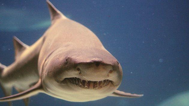 Tiburon: Más valioso vivo que muerto