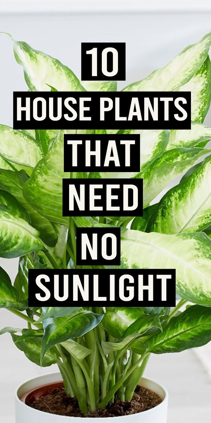 10 Houseplants That Can Survive Darkest Corner of Your House -   9 plants Room sunlight ideas