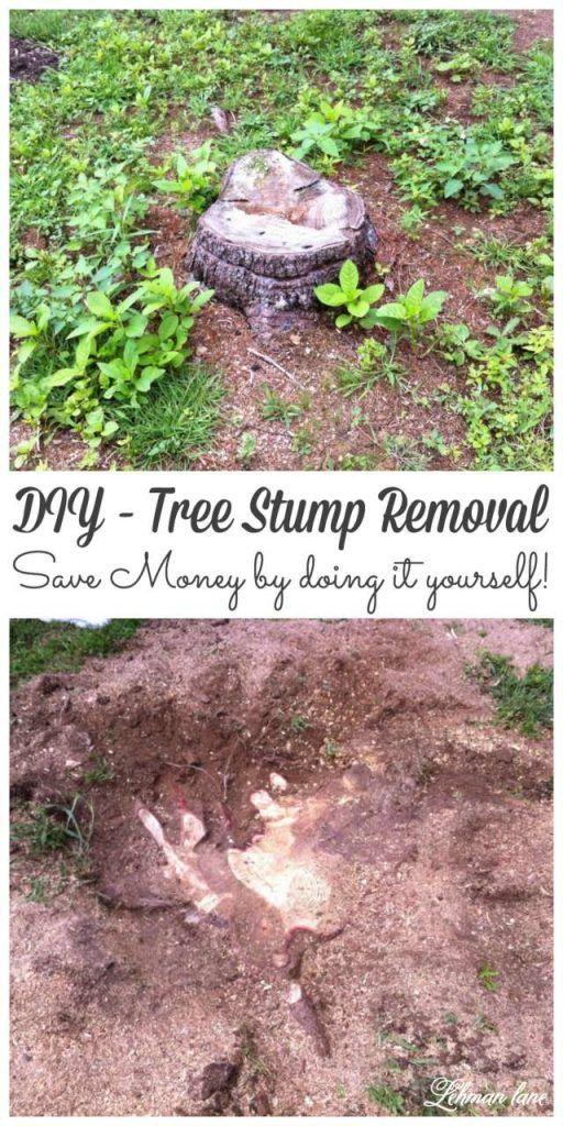 DIY Tree Stump Removal   Stump removal, Tree stump ...
