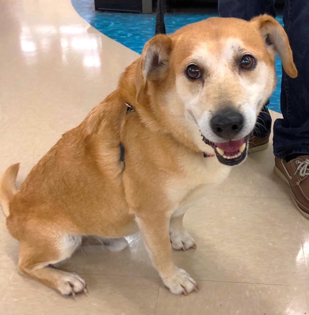 Adopt Beavis On Dogs Puppies Dogs Corgi Mix