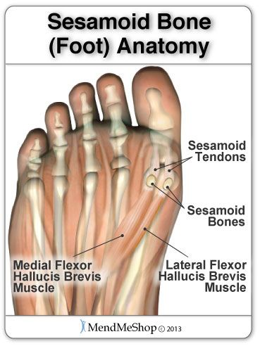 Two Sesamoids Are Located In The Ball Of The Foot Right Near The