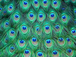 patron pluma pavo real - Buscar con Google