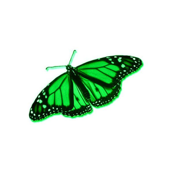 Яндекс.Картинки: картинки для поливора ❤ liked on Polyvore featuring butterflies, decor and green
