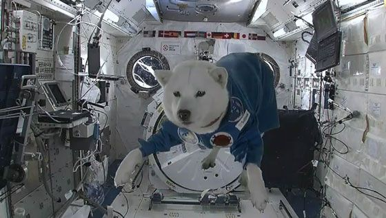 A spoof, but a funny one: After successfully blasting off into space, Softbank mascot dog Otosan (Japan) sends his Merry Christmas greetings from the International Space Station. In addition, he bumps into Santa while he's hovering in space.