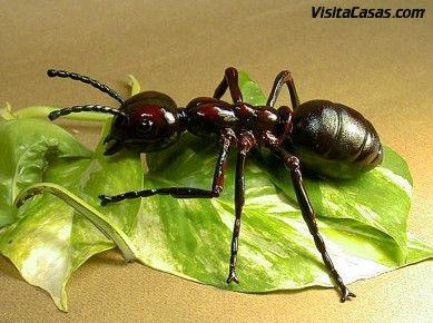 Como Acabar Con Las Hormigas En Mi Cocina El Feng Shui Y La Cocina Ahuyentar Hormigas Hormigas Como