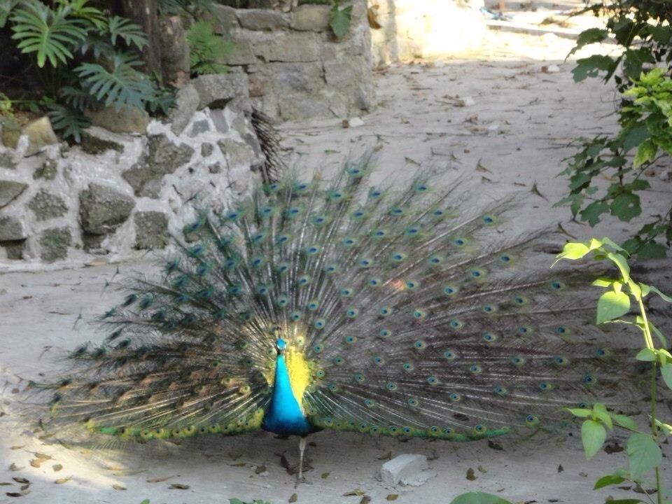 Perfect Atlantic Forest - Reviews - Municipal OrquidaRio - TripAdvisor