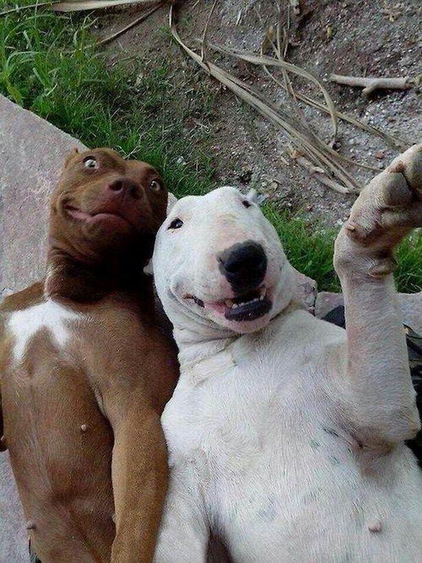 18 ภาพส ดฮา เม อน องหมาถ ายเซลฟ เพชรมายา Funny Dog Pictures Cute Funny Animals Funny Animals