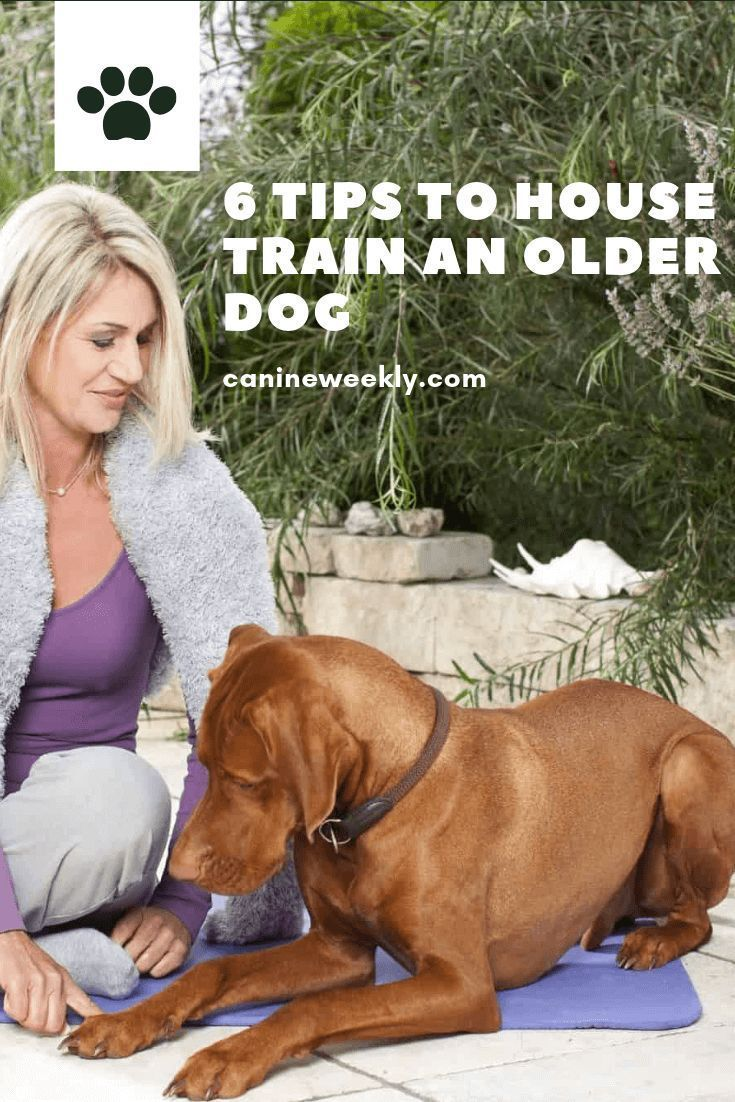 Housebreaking A Puppy A Time Proven Potty Training Routine
