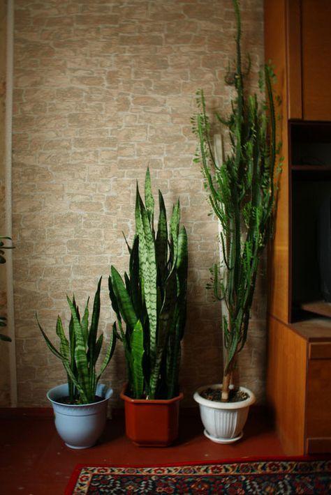 7 Luftreinigende Pflanzen Fürs Schlafzimmer | Pinterest | Interiors