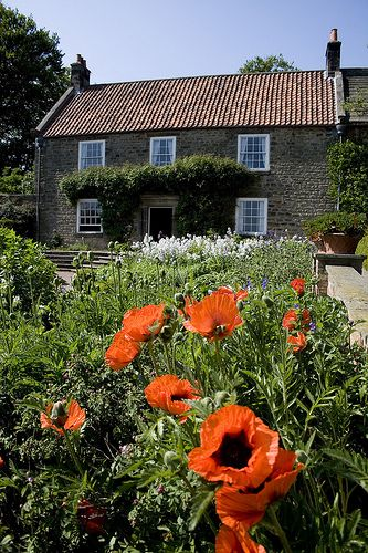 Pockerley Old Hall Poppies, Beamish Museum by Beamish Museum, via Flickr