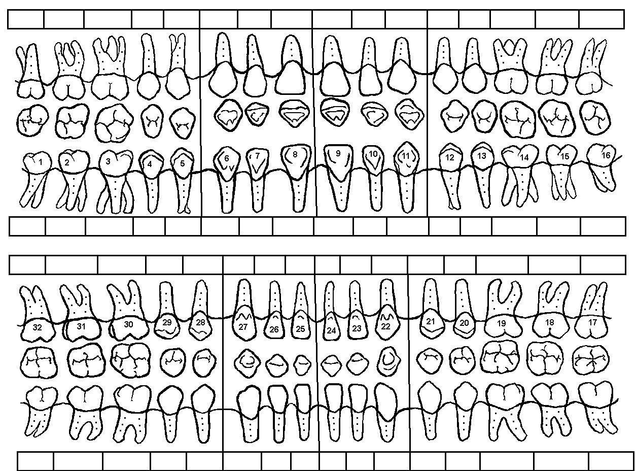38 Printable Dental Chart In 2020 Tooth Chart Dental Charting Printable Chart