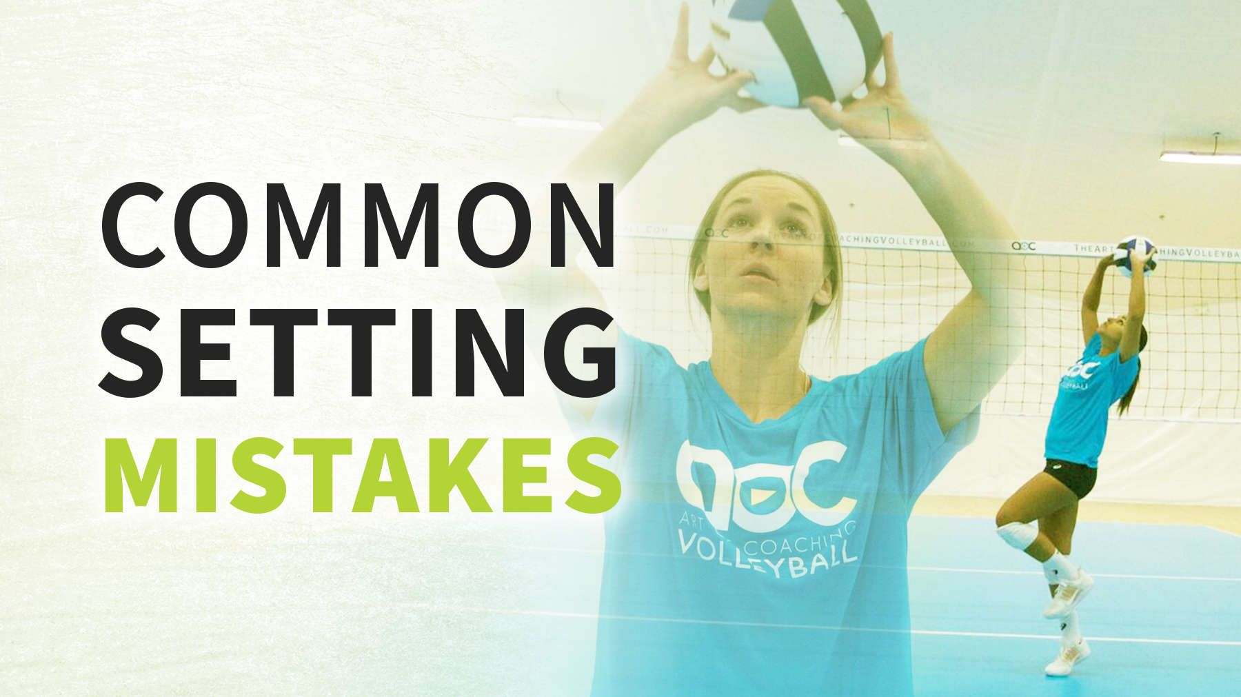 How To Train A Setter Common Mistakes
