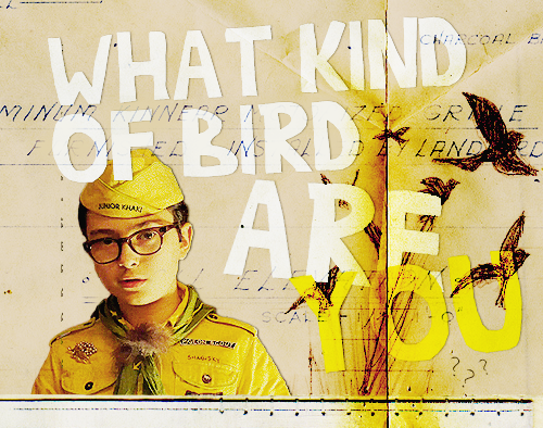 What kind of bird are you? Moonrise Kingdom Fan Art