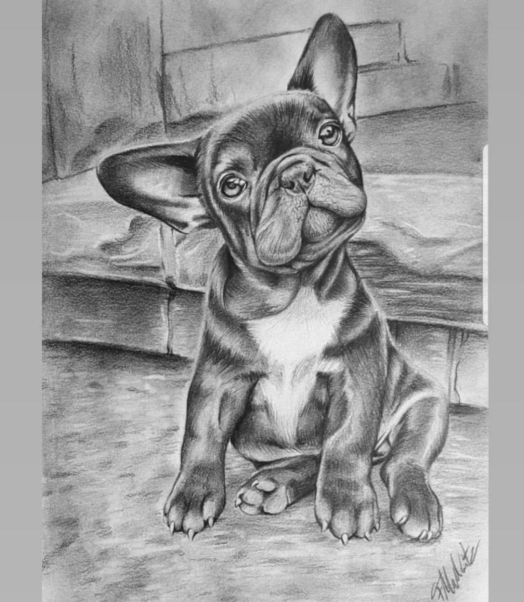 Franzosische Bulldoggen Welpe Art By Icedragon Art Realism Drawing Zeichnung Germanartist Welpe Franzosische Bulldoggen Kunst Zeichnungen Katze Zeichnen