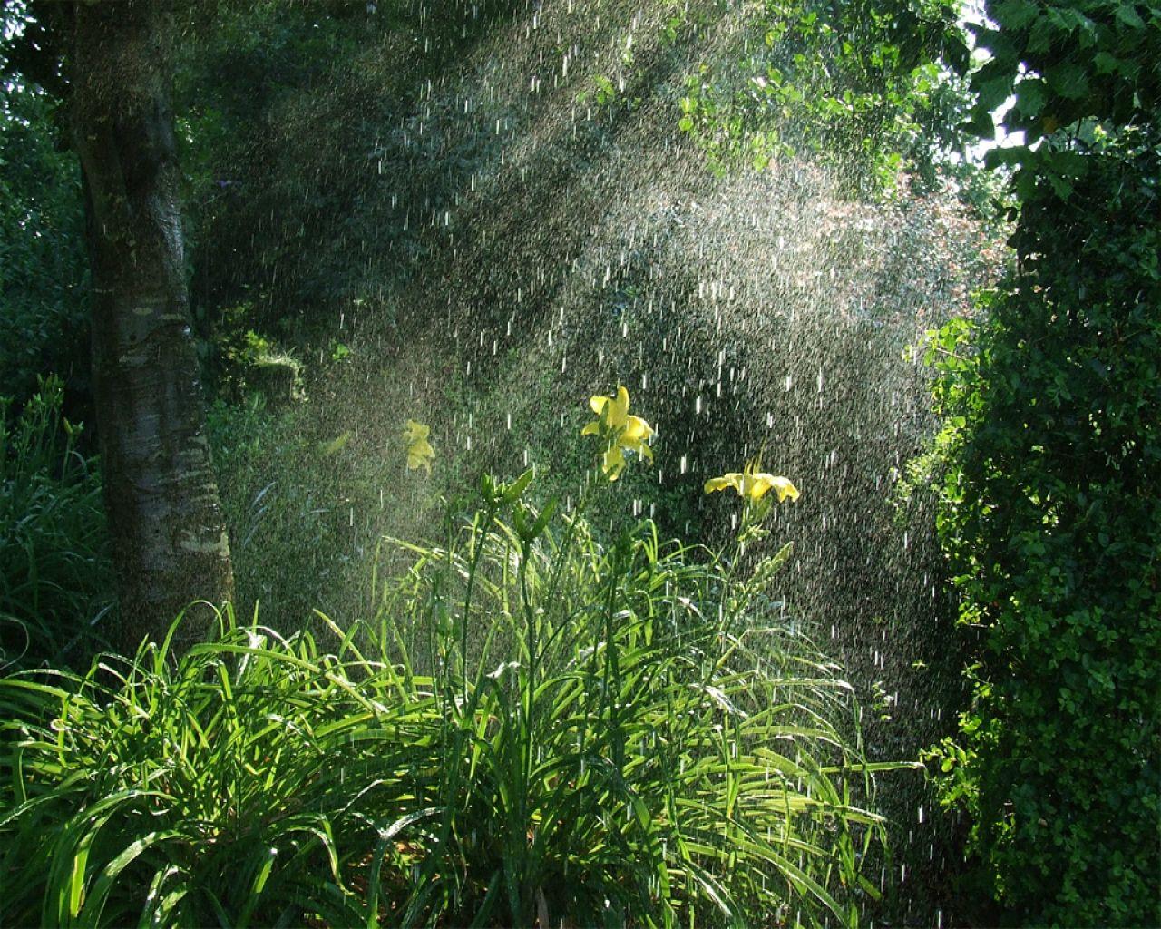 La Lluvia Nature Landscape Rain Photography