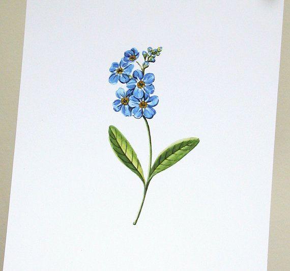 Olvidar Me no original ilustración arte impresión por giardino
