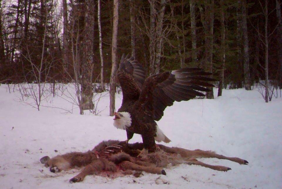 9humor Just Nice Humor Eagle Trail Camera Deer