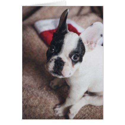 Santa Claus Dog Funny Pug Dog Claus Card Christmas Cards Merry Xmas Diy Cyo Greetings Training Your Dog Puppy Training Puppies