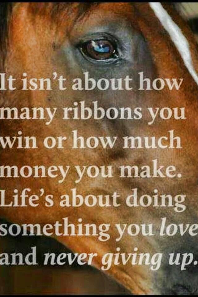citater om liver Lifes about | Horse Quotes | Pinterest | Citater, Heste and  citater om liver