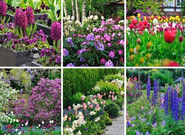 6 massifs de fleurs pour le printemps jardin pinterest couleurs chaudes pourpre et mise. Black Bedroom Furniture Sets. Home Design Ideas