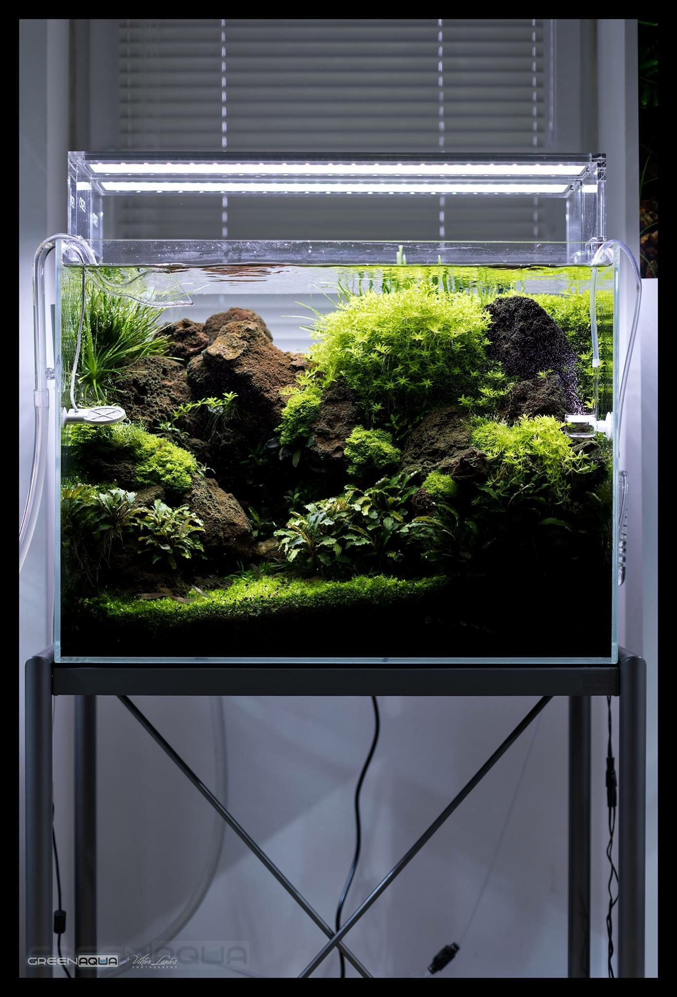Pin by germán rivera on aquascaping pinterest aquariums planted