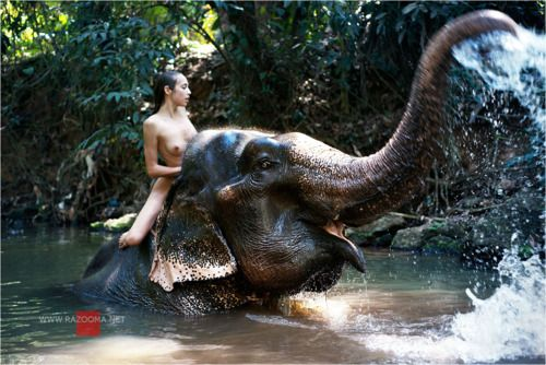 Will know, N u d e elephant and girl right! Idea